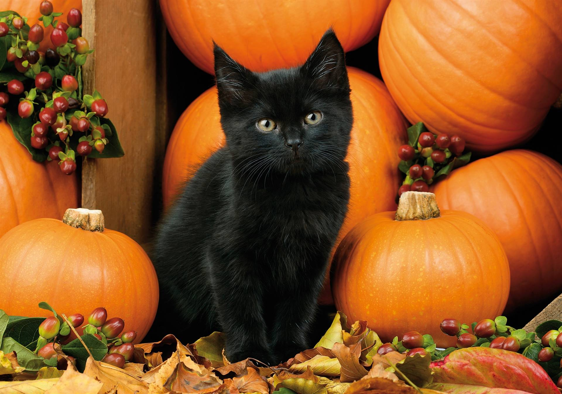 black kitten surrounded by orange pumpkins